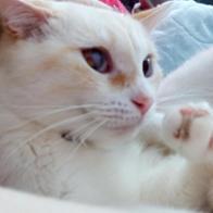 Bea y chuchis (y gatis)