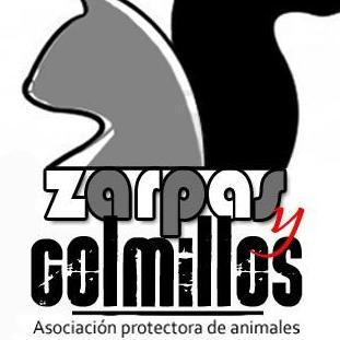 Asociacion Protectora Zarpas y Colmillos