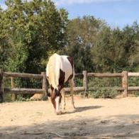 Nature Horse