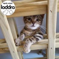 Asociacion LADDRA Animal.org